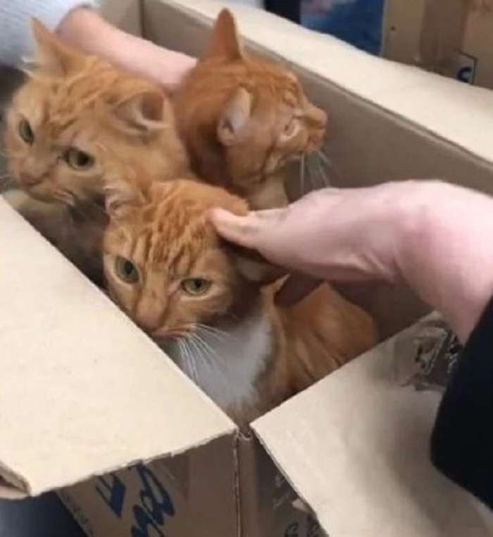 gattini arancioni salvataggio
