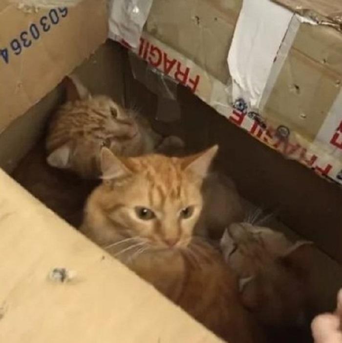 gattini scatolone salvati