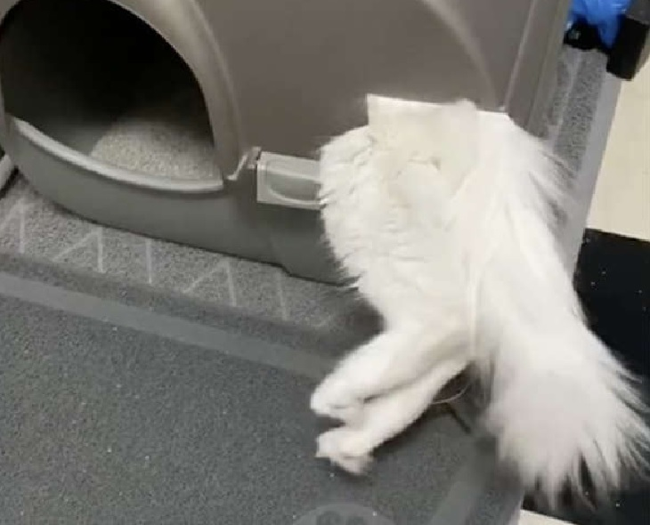 gucci gatto entrata secondaria