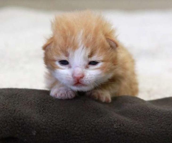 herbie gattina trovata spazzatura