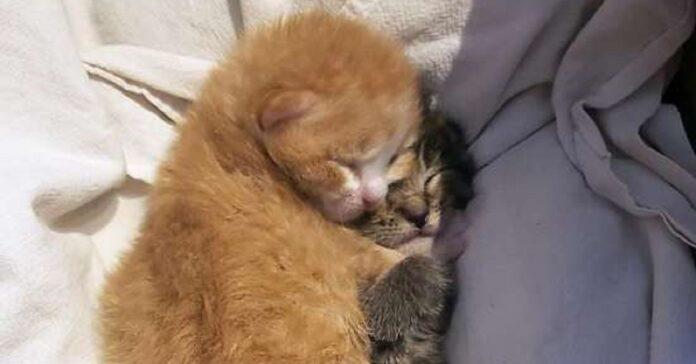 herbie pippi gattine stesso passato trovano casa
