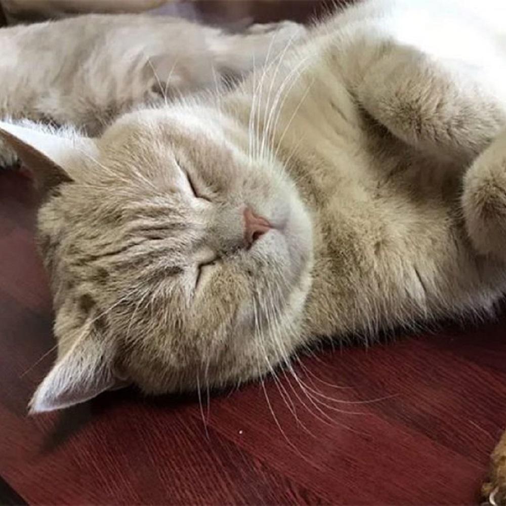 yugawara gatti scelta adozione