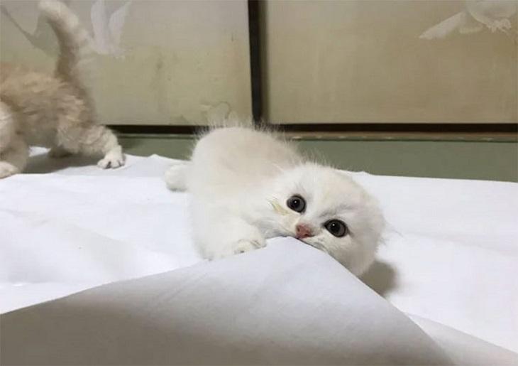 yugawara gattini hotel protagonisti