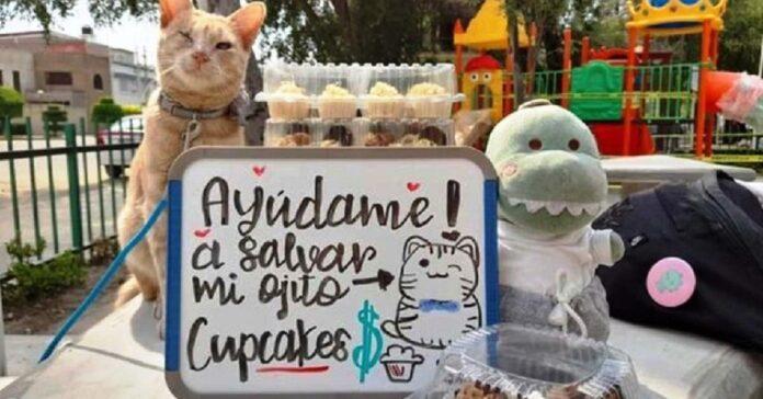 antonio gattino cecità