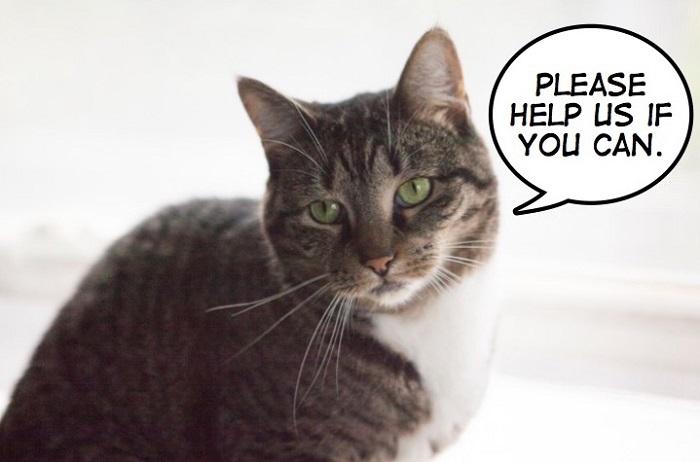 antonio gattino aiuto