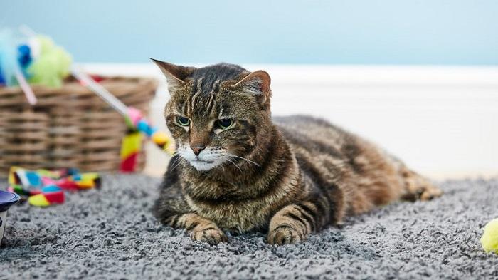 gattino foto relax