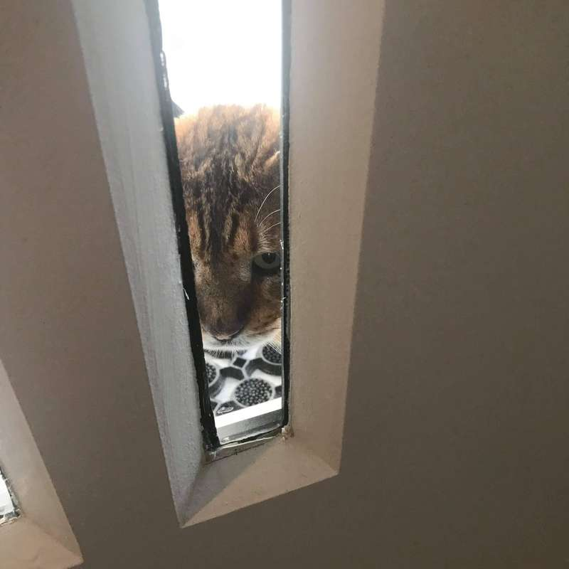 gattino intrufola casa
