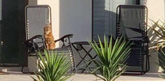 gattino chopper foto