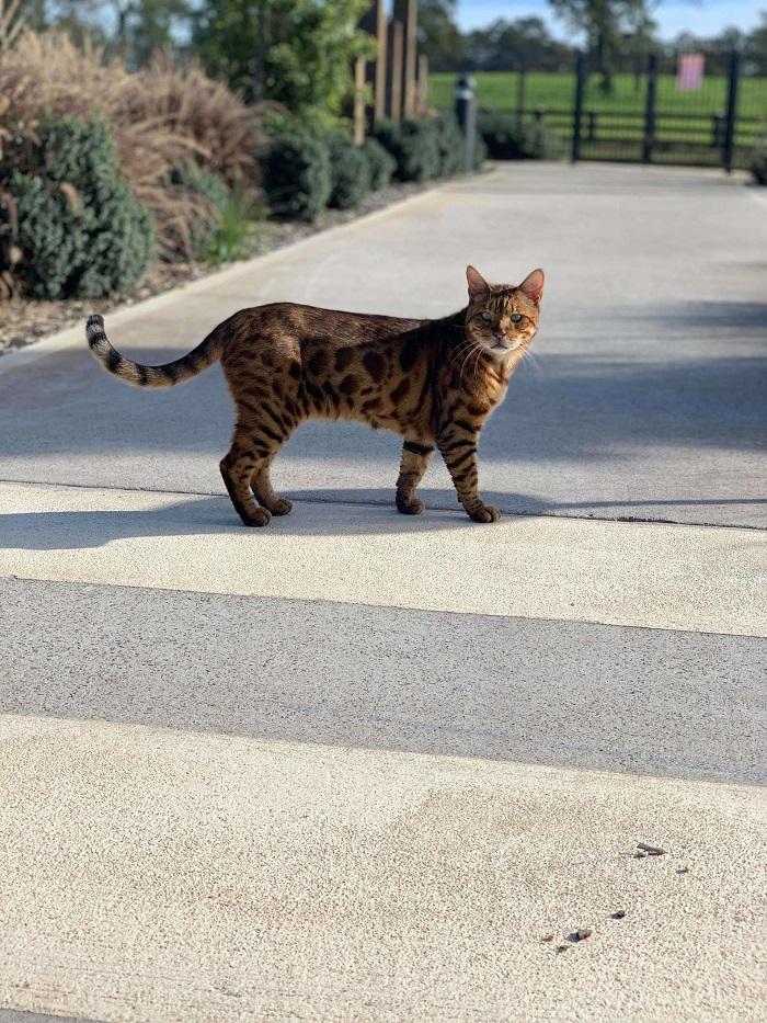 gattino fotografia intrufolato