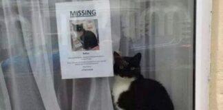 moggy gatto smarrito