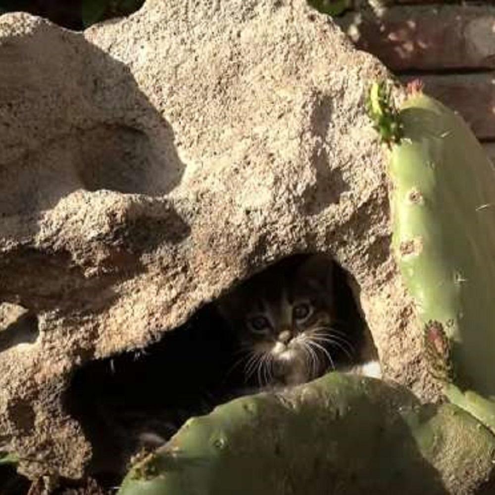 cactus aloe gattini fratelli