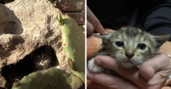 salvataggio gattini nascosti roccia