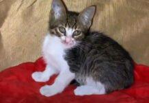 salvataggio gattino felix nascosto sotto auto