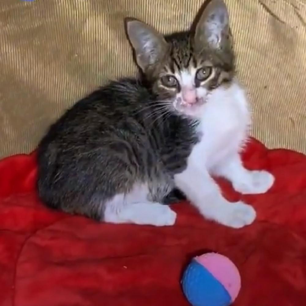 felix gatto visita veterinario