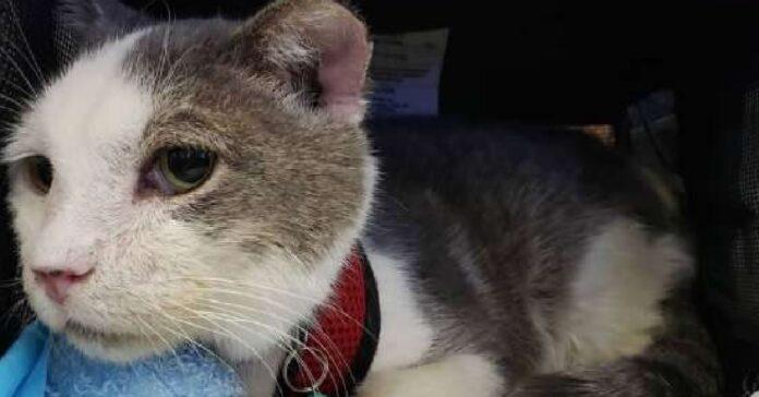 salvataggio del gatto champ in un vicolo abbandonato