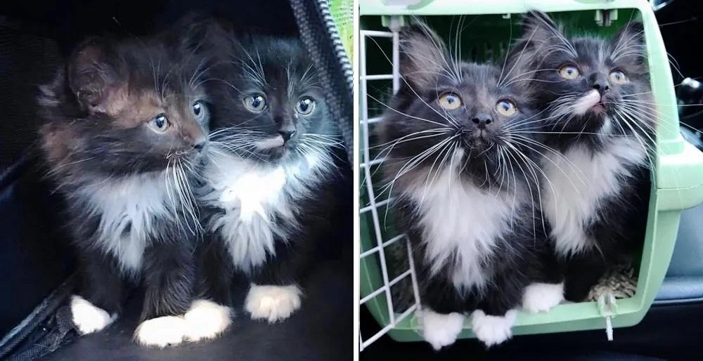 gatti-salvataggio-gemelli