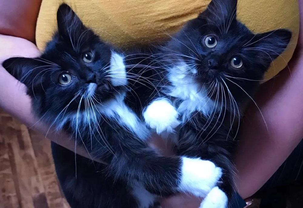 gattini-inseparabili-foto