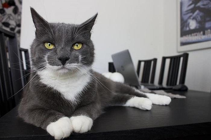 gattino abbandono bob