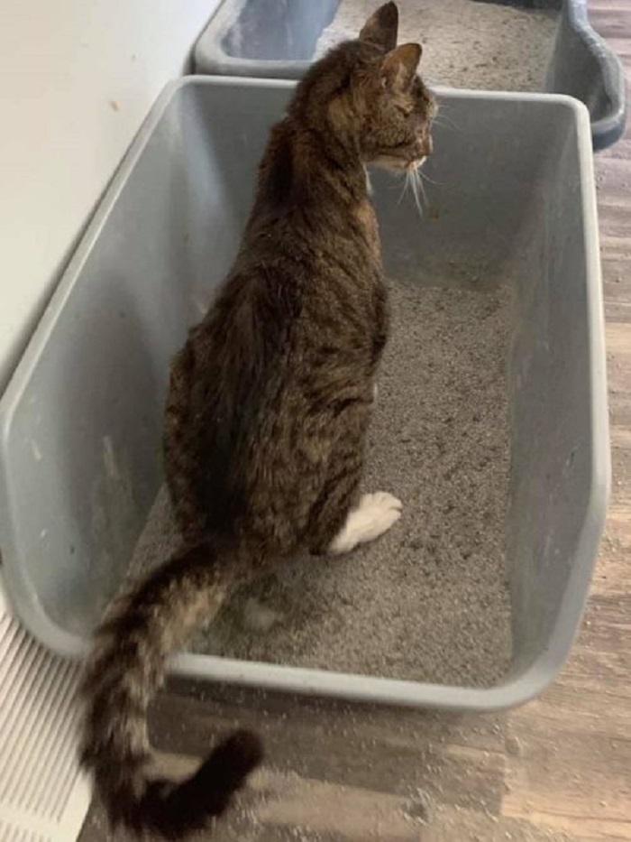 bones gattino curato