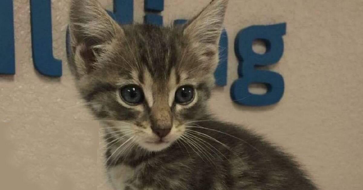 Bryson gattino salvato