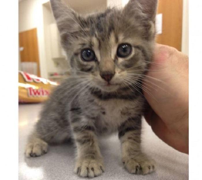 bryson gattino bloccato
