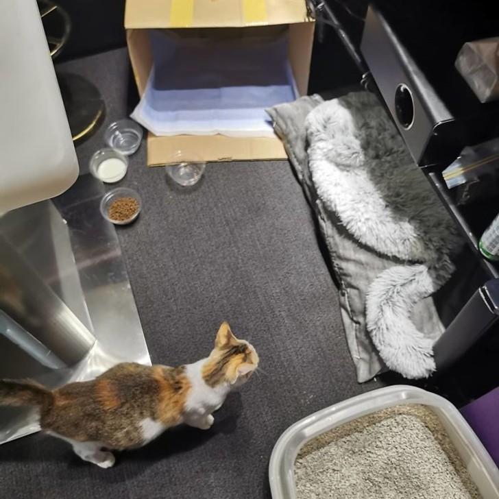 bubu-cibo-gattini