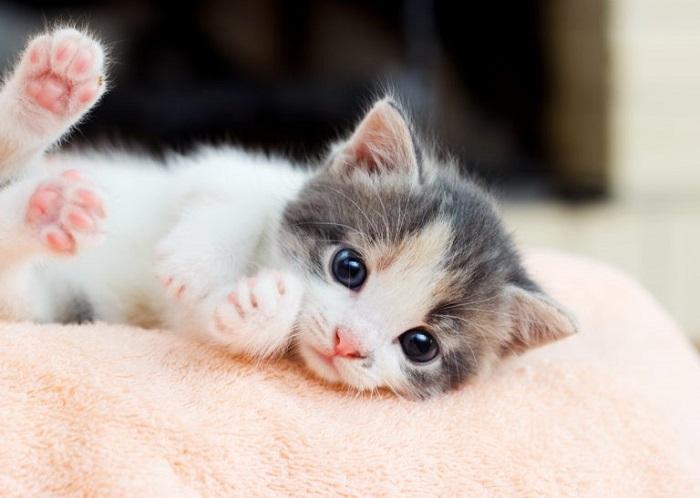 cucciolo gattino relax