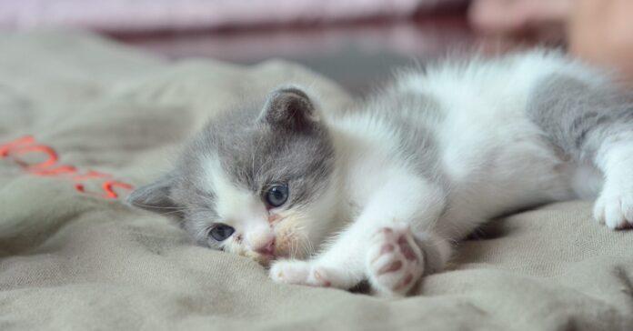 cheeto gattino salvataggio