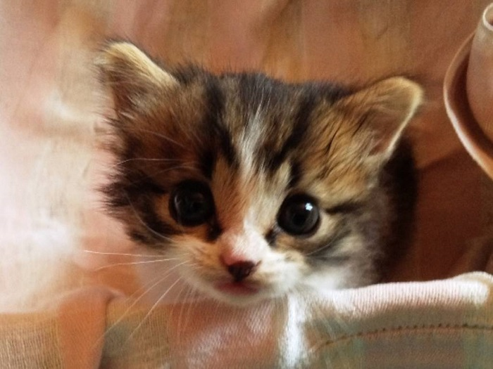 gattino foto piccolo