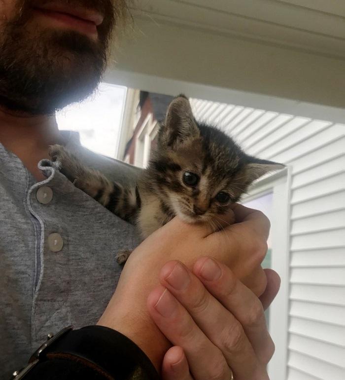 abbraccio cucciolo gatto