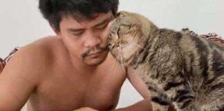jarvis gattino proprietario