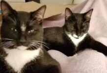 kurt mel gatti fratelli trovano casa momento giusto posto giusto