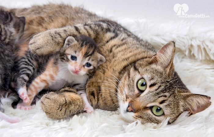 gattini mamma cura
