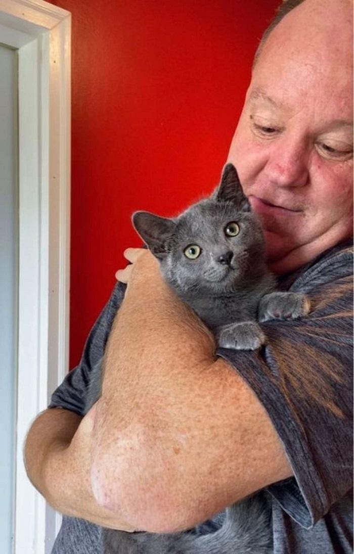 gattino volontario adozione