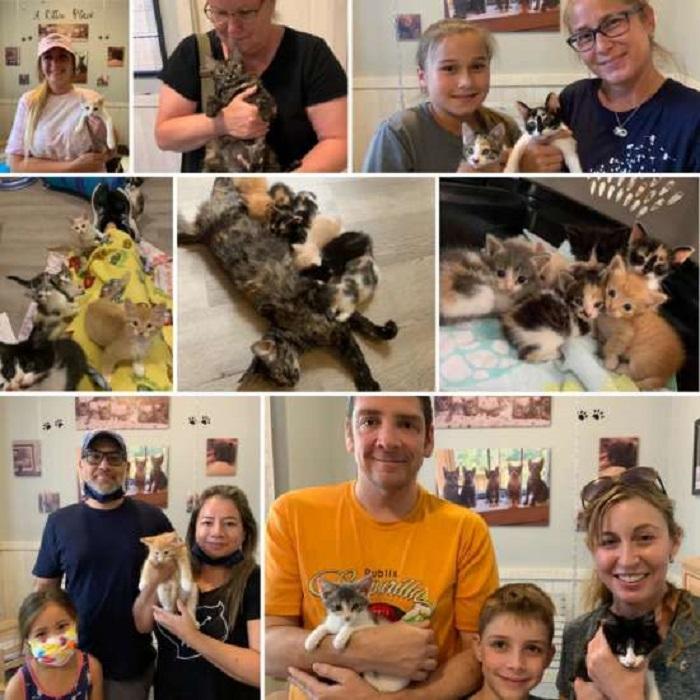 nuova famiglia adozione