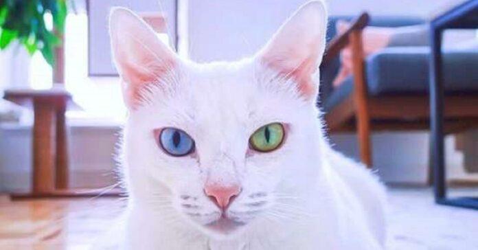 sansa gattina diversa