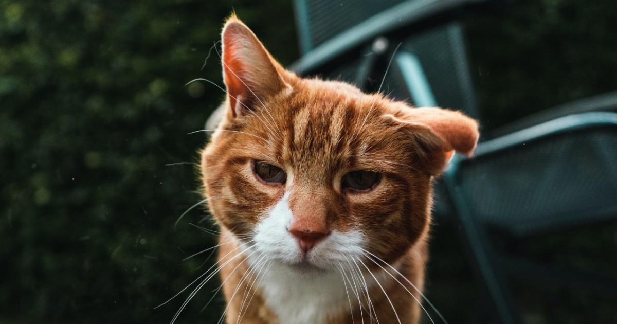 Gatto anziano dimagrisce