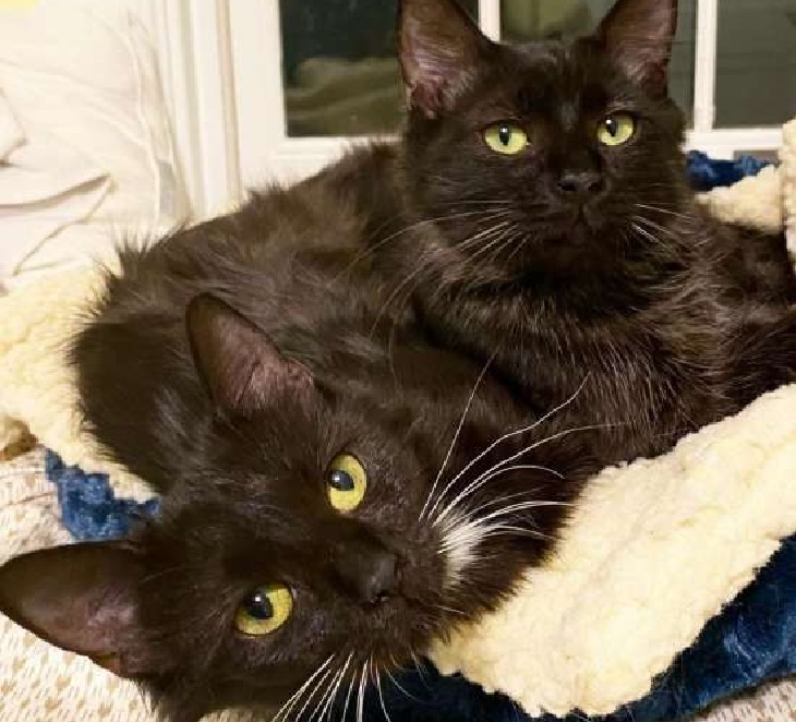 luke leah gattini miracolo probabile