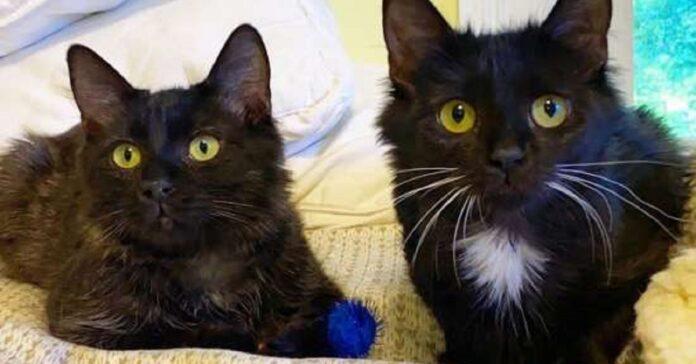 luke leah gatti che sono sopravvissuti contro ogni previsione