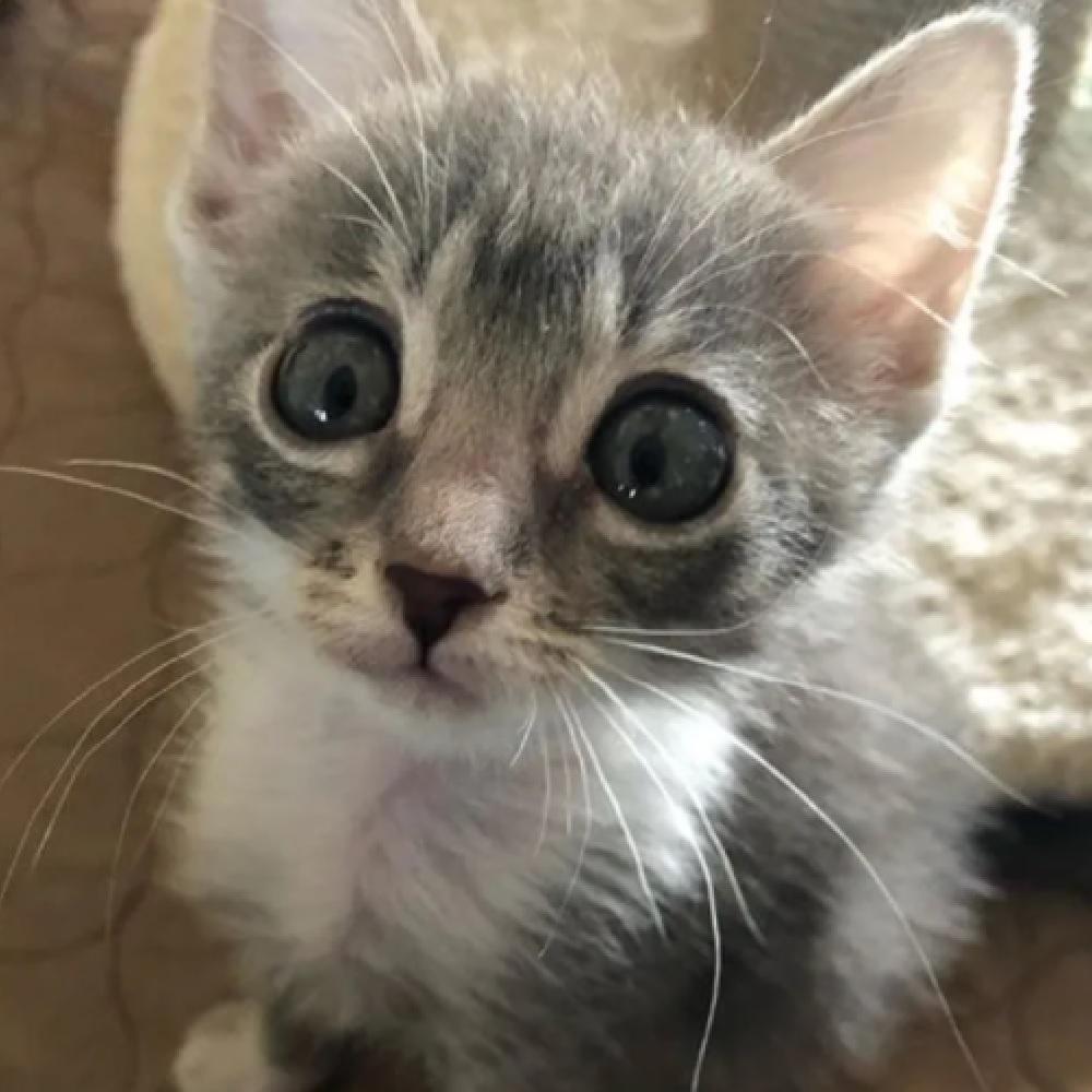 luna gattina las vegas salvata