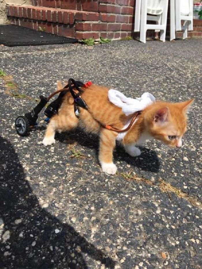 cucciolo gattino rotella
