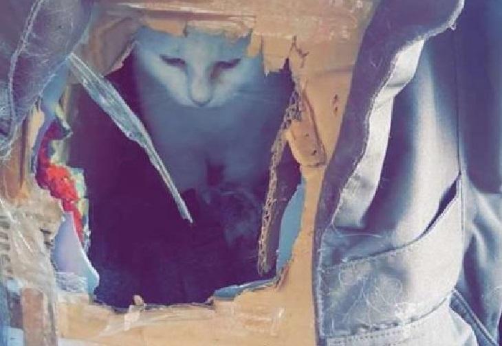 marcy gatta abbandono dopo trasloco