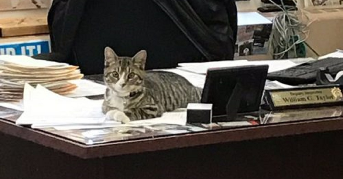 martin gattino poliziotto