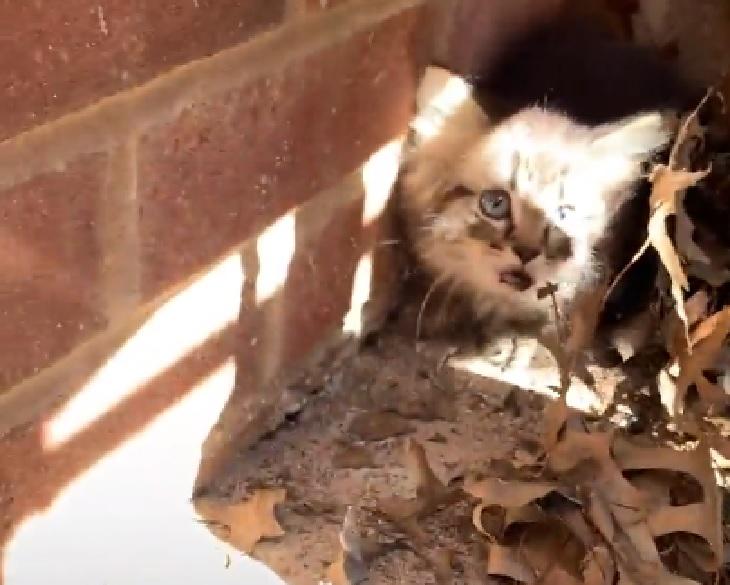 maui gattino scappa vicino scuola