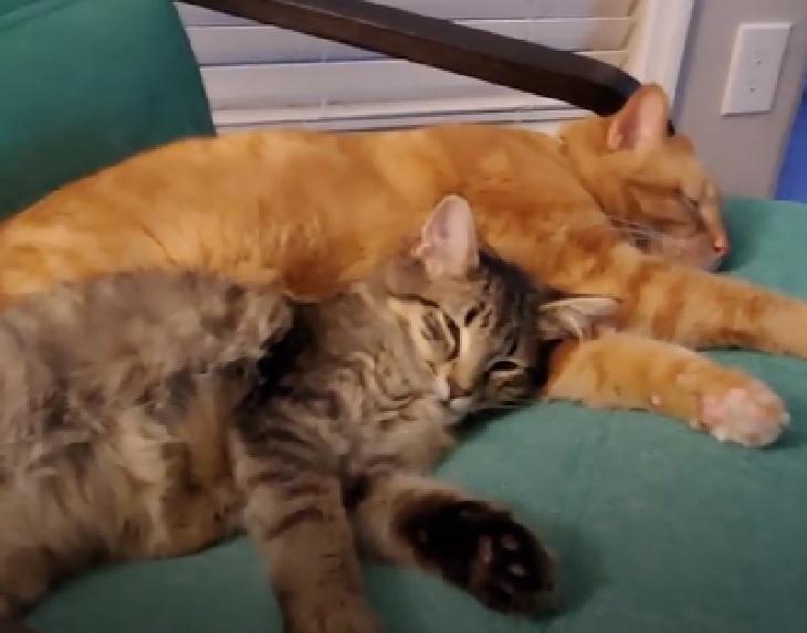 maui gattino conoscenza fratelli