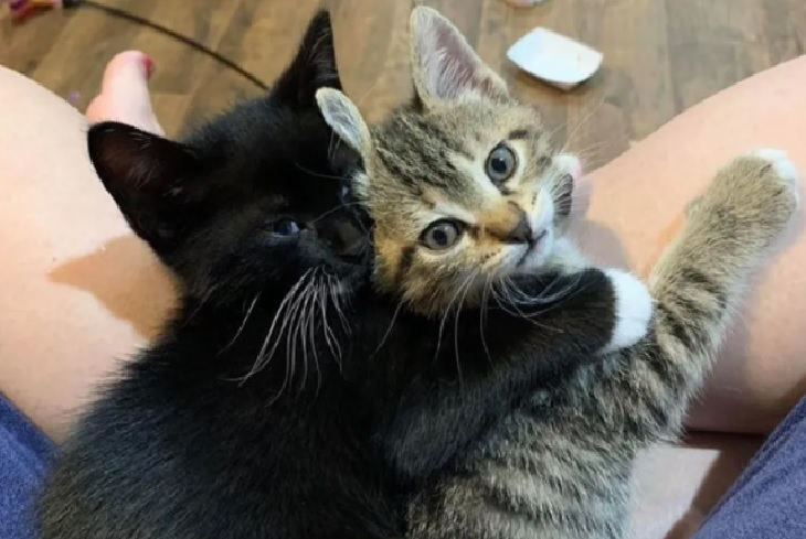 milk gatta piccoli gattini club