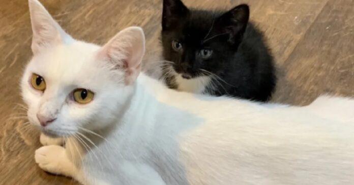 milk la gatta in grado di proteggere tutti i suoi figli