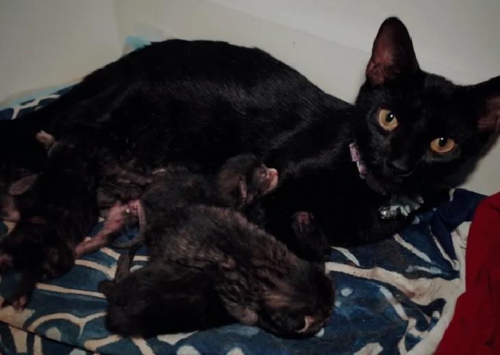 suki gatta da alla luce 7 micetti