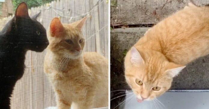 miso suki gattini cercano conquistare cuore donna