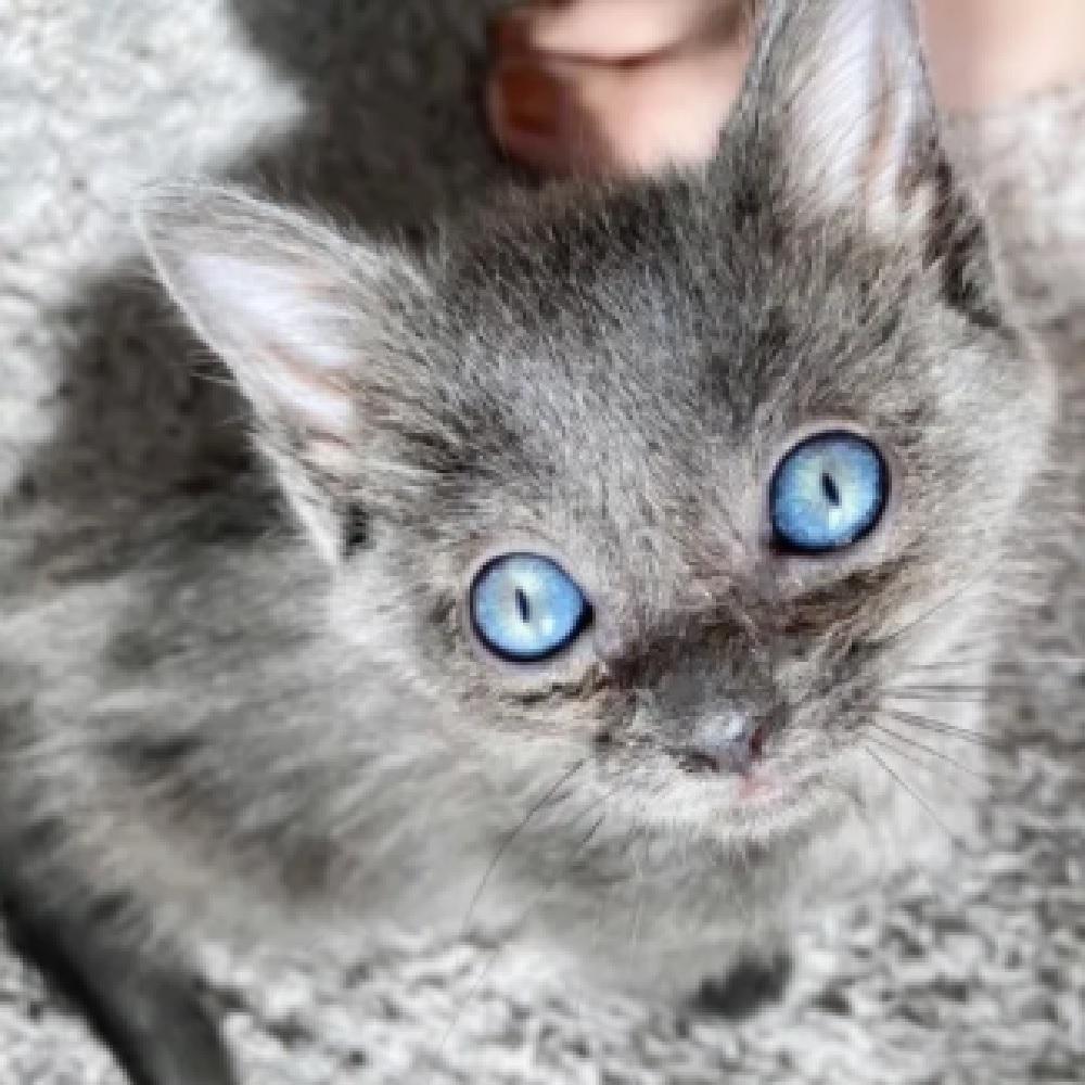 pawly gattina pazienza adozione